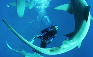 《鲨鱼海洋的灭绝》,一位海洋动物保护者和他的遗作