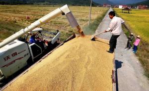 當代中國的五種農民類型及其政策含義
