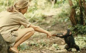 讲座   黑猩猩的阴暗面:欺骗、战争、不能容忍小群体