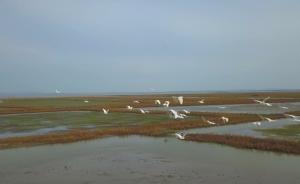 """?#19981;?#30707;臼湖为鸟类拆除""""天罗地网"""""""