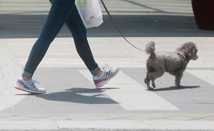 武汉开展为期三个月养犬整治行动,将查处?#39612;?#36829;规养犬行为