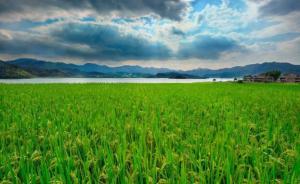 图解丨2019年重点强农惠农政策来了