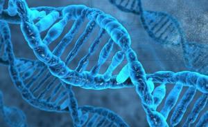 我国拟立法规范与人体基因、人体胚胎等有关的医学和科学研究