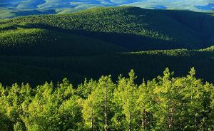 我国天然林资源连续增长,蓄积量达到136.71亿立方米