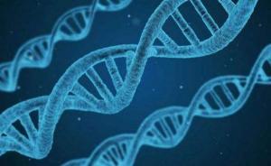 """学者开发""""多基因风险评分""""系统:仅一个分值可预知肥胖风险"""