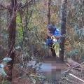 西双版纳一地质队职工遭野象袭击身亡