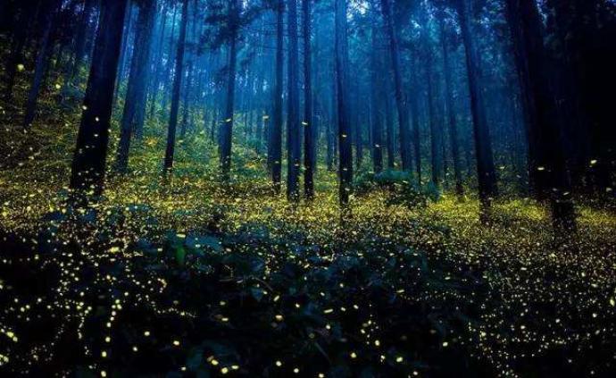 夏夜觀看螢火蟲可以去這幾個地方