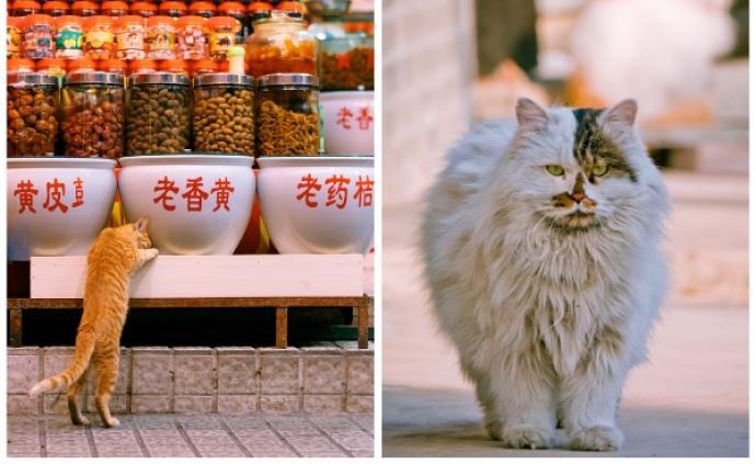 """对谈""""街猫摄影师""""花哥:旅行不止,喵呜不停"""