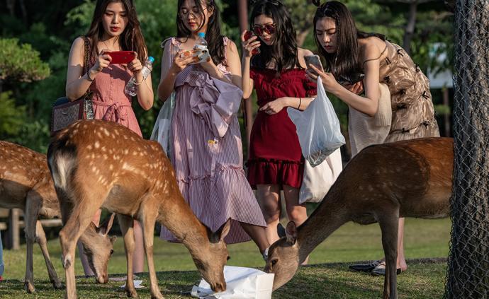 早安·世界|日本奈良死鹿肚子里发现3.2公斤塑料垃圾