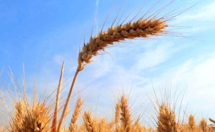3600年前谁把大麦带进青藏高原?中国北方粟黍农业人群