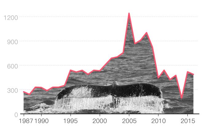 日本重啟商業捕鯨背后,不止是滿足口腹之欲那么簡單