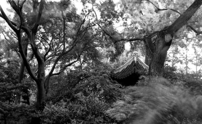 城市漫步·影集 在上海的两座园林中