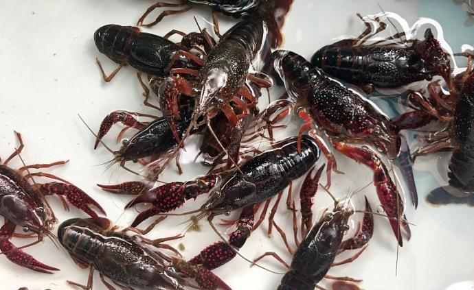 小龍蝦、牛蛙、生魚片都有寄生蟲?如何防止中招?