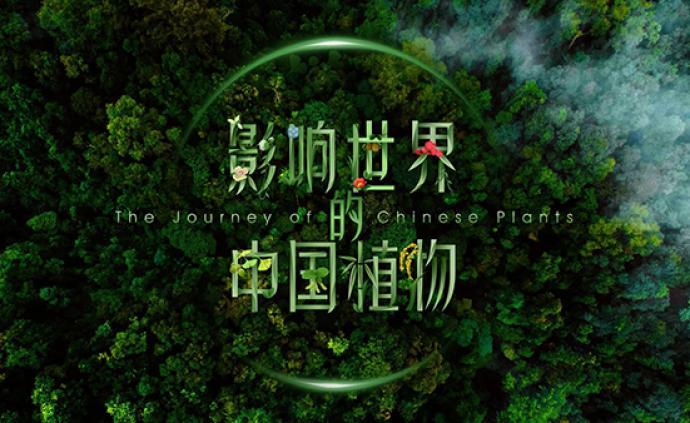4K紀錄片《影響世界的中國植物》即將播出