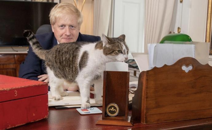 国际猫咪日:英国首相亲贺首席捕鼠大臣