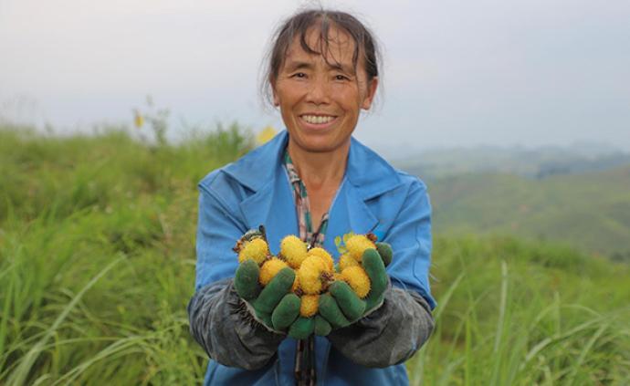 三部門發文鼓勵政府采購貧困地區農副產品