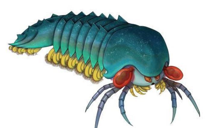 科学家发现5亿年前蝎子、蜘蛛等螯肢动物始祖