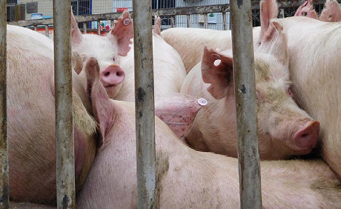 专家:国办印发《意见》推动生猪产业高质量发展