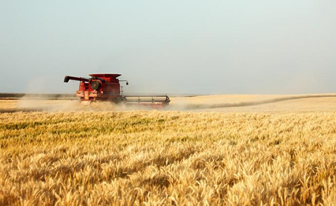 今年粮食有望再获丰收,预计大豆面积增加1000万亩