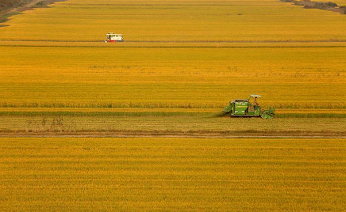 國家糧食和物資儲備局:解決好吃飯問題是治國理政的頭等大事