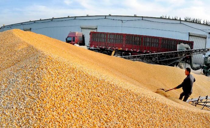 國家糧食和物資儲備局:把飯碗牢牢端自己手中,裝更多中國糧