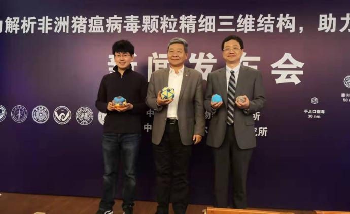中國團隊獲首張非洲豬瘟病毒結構高清圖,為新型疫苗提供線索