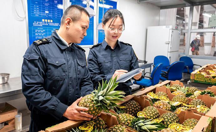 """""""吃""""在进博会 巴拿马金菠萝首次大批量运抵中国,共21吨"""