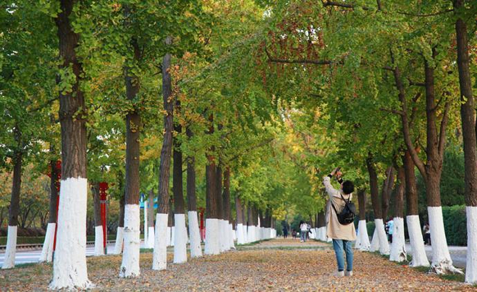 南京發力建公園:到2035年擬實現三百米見綠、五百米入園