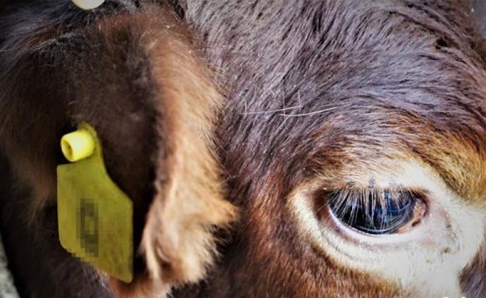 宁夏一村庄有村民冒领养牛扶贫款:拿了钱,家中连牛棚都没有