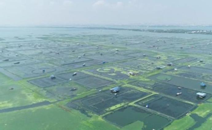 """陽澄湖被央視質疑""""蟹污染"""",蘇州即日部署全面整改"""