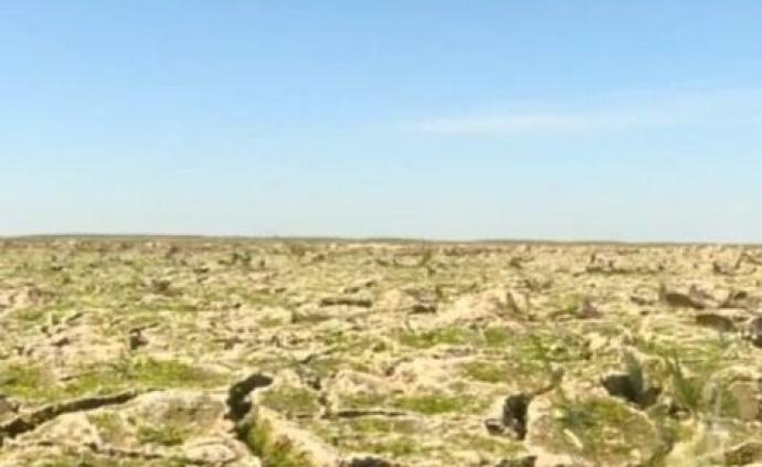 鄱陽湖區水位創新低:天鵝、大雁都不來了