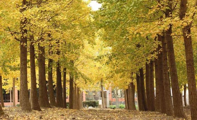 上海16區私藏的秋季美景,你最喜歡哪個