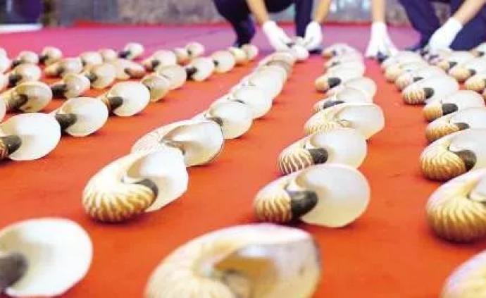 北京海关前10月查获旅检及快件渠道携带鹦鹉螺壳案件21起