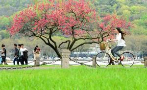 杭州多部门联合发环保倡议书,建议游客步行、骑车进西湖