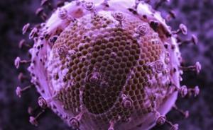 艾滋病病毒正在变弱,感染潜伏期正在变长?