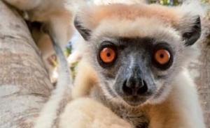 《自然》杂志最新报告:人类可能已引发第六次物种大灭绝