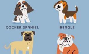 伦敦动物园哺乳动物馆馆长:你误解的关于狗狗的十个科学问题