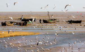 主管部门既要保护又要开发,沿海滩涂急剧减少致候鸟濒危