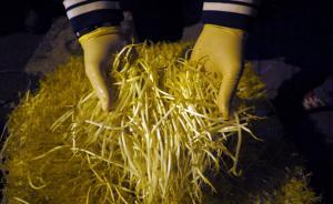 """食品安全法专家谈""""毒豆芽"""":权责不分、标准体系缺失致争议"""
