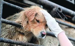 """因打狗遭""""人肉""""和恐吓:动物保护的边界在哪里?"""