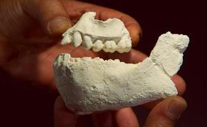 埃塞俄比亚发现350万年前新人种,具有猿和人的特征