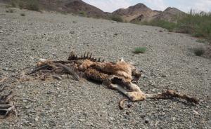 专访|你所不知道的野生动物保护:为什么保护?情况多危急?