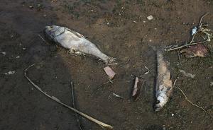 武汉一湖泊连续4年死鱼,污水处理能力跟不上城市扩张成通病
