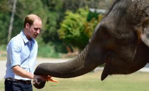 """中企与英国威廉王子共设基金打击非洲盗猎,数额""""十分可观"""""""