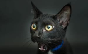 美又萌的小黑猫,并不会让你变得不幸
