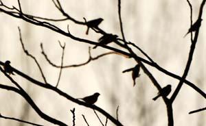 新华社:下一个被毒死的可能就不仅仅是麻雀