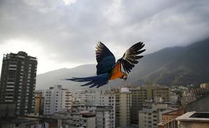 上海男子家养金刚鹦鹉出售时被抓,获刑并罚款5千元