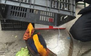 检察日报刊文:保护动物都卖到市场了,执法还宅在办公室