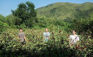 自下而上的香港实践:耕种活化社区