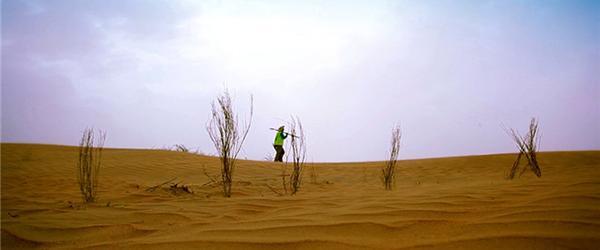 上海种树母亲获澎湃和阿里2万奖励:沙漠种的树都是我的孩子